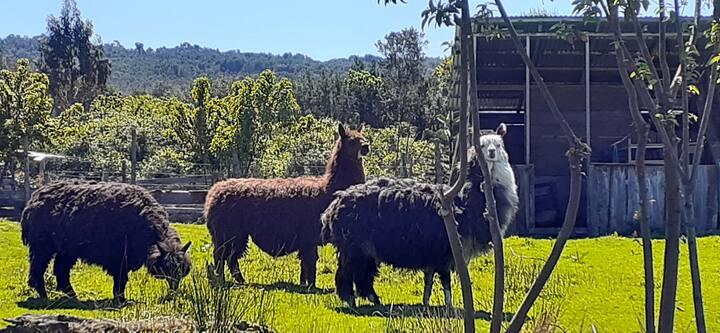 Cabañas Chiloe Profundo
