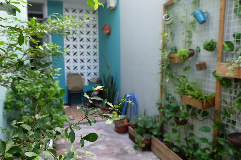 Tiny garden with adorable plants that help to cool down the heat when you get back home.