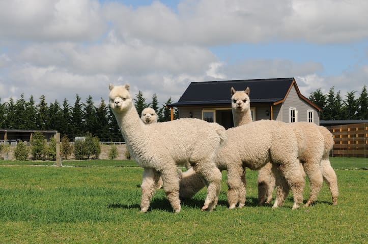 Honeyfields Alpaca Farm Stay Cottage