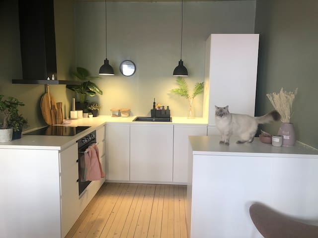 Newly renovated central apartment