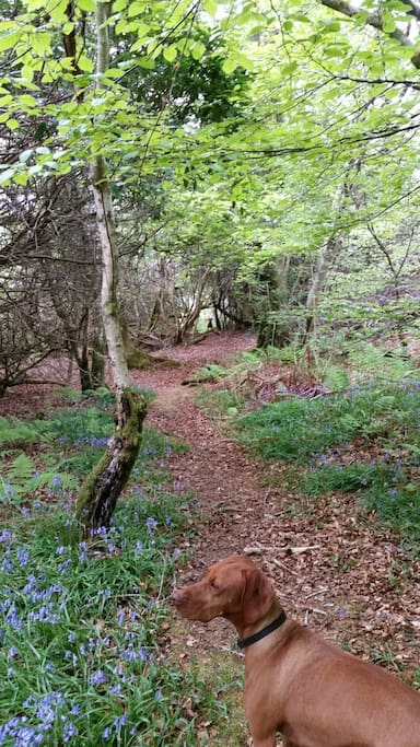 Airds Wood