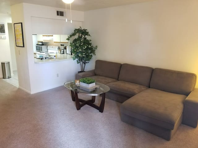Spacious Apt in the Heart of Downtown Gainesville!