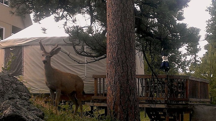 Comfortable Yurt Near Rocky Mountain National Park