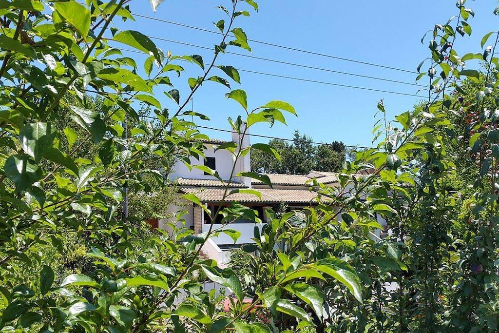 Green garden of the hole house