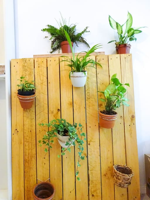 """I love plants! So I made this """"green wall"""" myself"""
