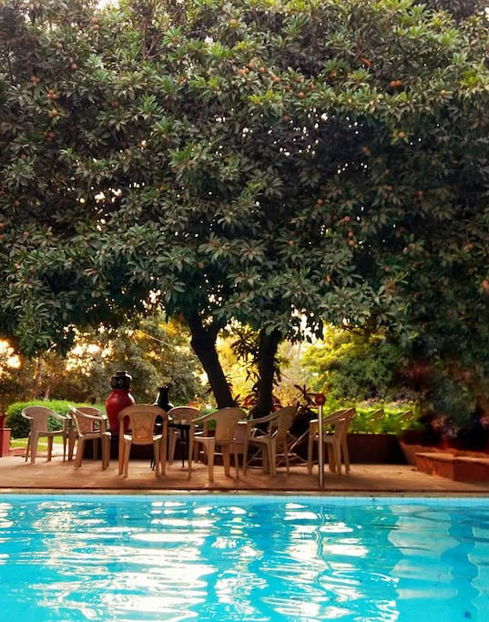 Cozy chill spot by the pool, under a Chikoo tree.
