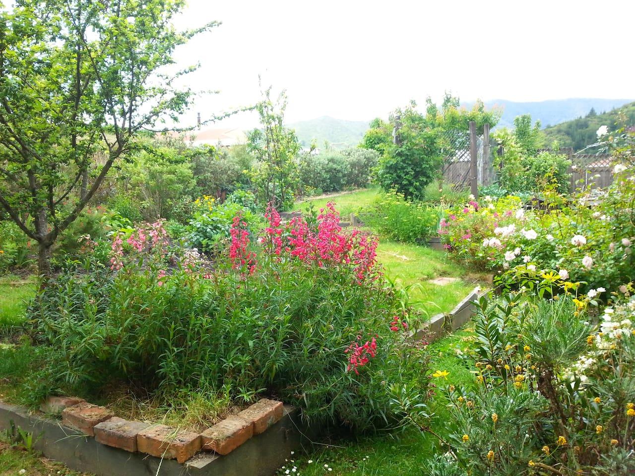 Garden out back summertime