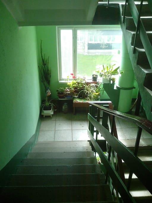 На каждом этаже на лестнице цветы.