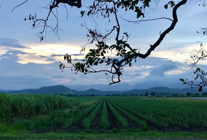 Farm Stay close to Murwillumbah - Tygalgah - Pis