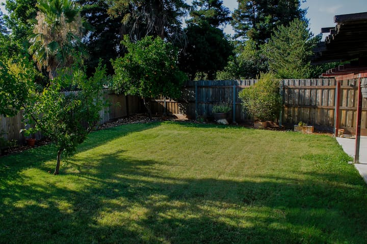 A spacious backyard to enjoy; help yourself to a plum or an orange!