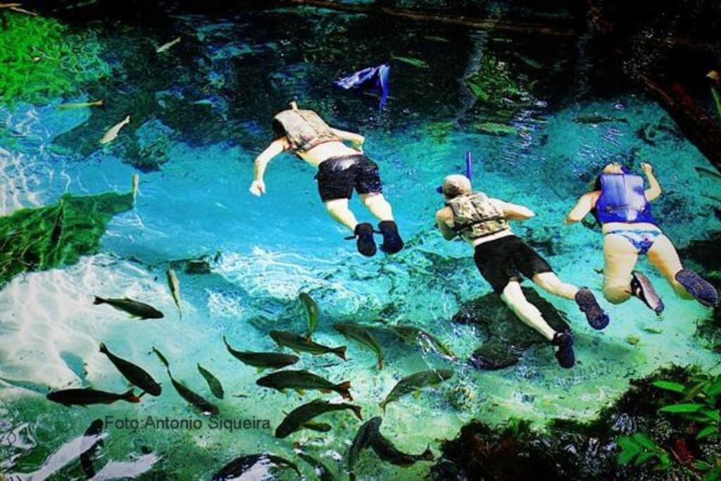 aquário encantado