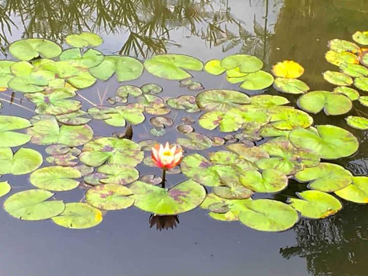Casa Avándaro, jardín, jacuzzi, estanque y huerto.