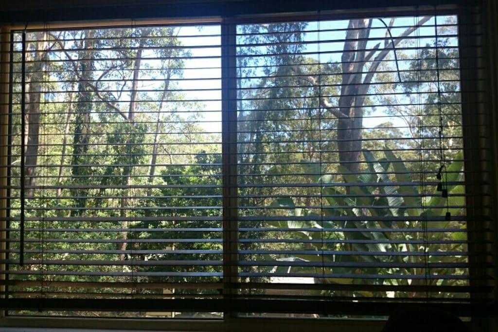 serene views