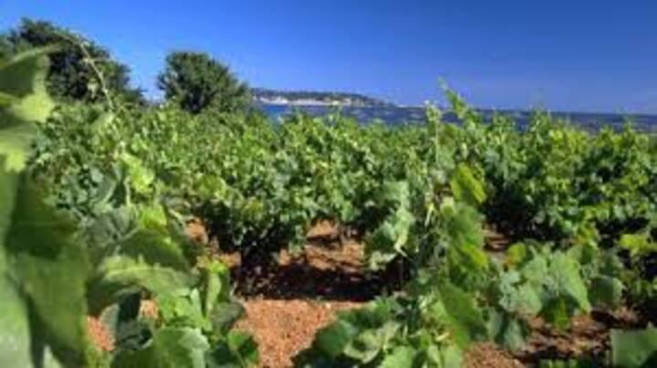 Village au coeur des vignes et à 10mn de la mer