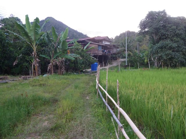 rice field next to longhouse