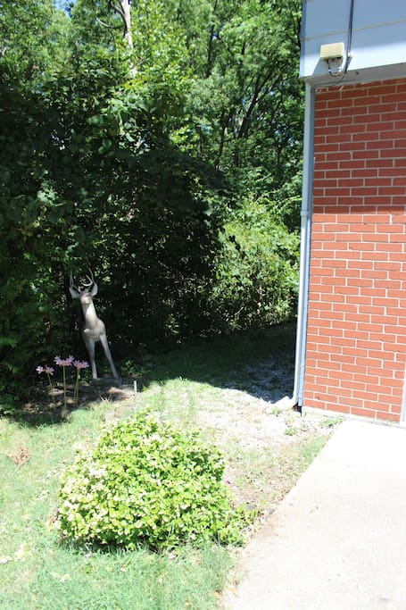 Welcoming deer - this way to the apartment!