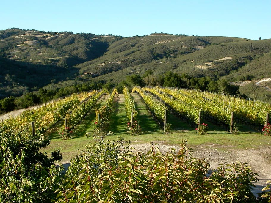 Rombi Estate Vineyard Cabernet and Merlot.  Your view from the guest cottage!