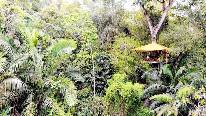 Alunaris casa en el àrbol Palomino