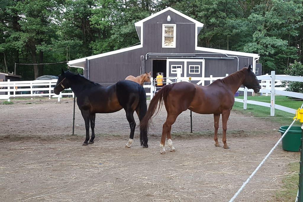Barn/ horses.