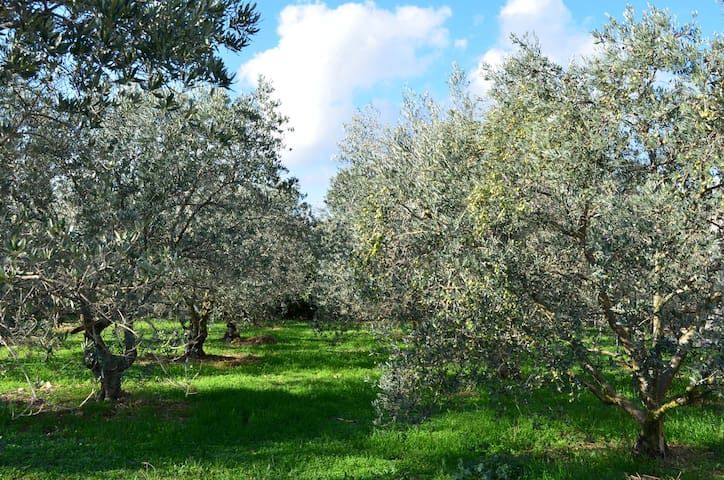 Jardin des oliviers 2000m2 devant le chalet.