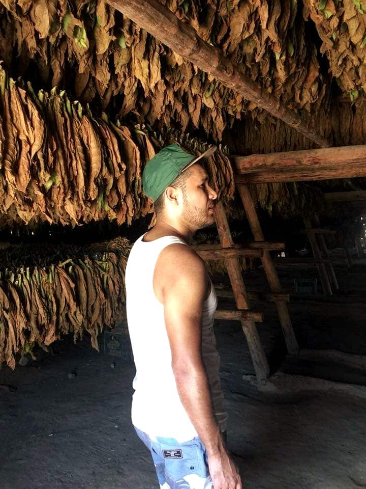 Farm of a tobacco product