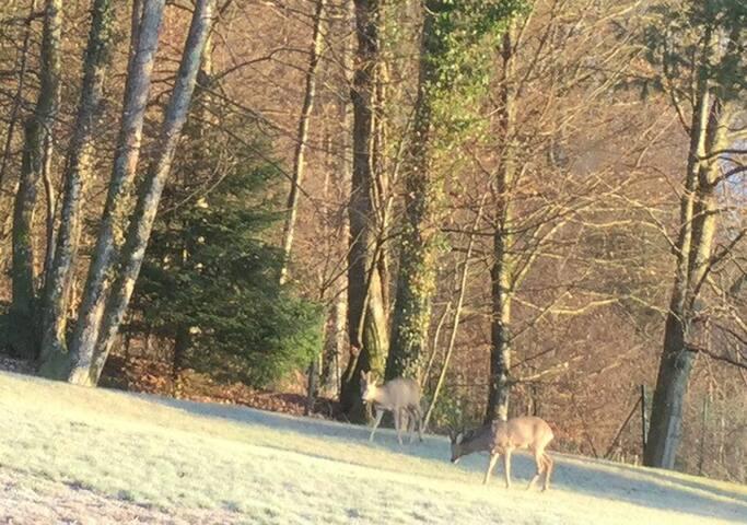 Visite matinale juste derrière la maison