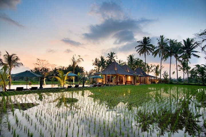 Beautiful house surrounded  rice paddies view