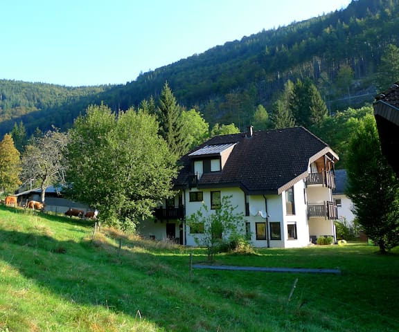 Naturnahe Ferien am Feldberg / Aftersteg - Todtnau - Appartement en résidence