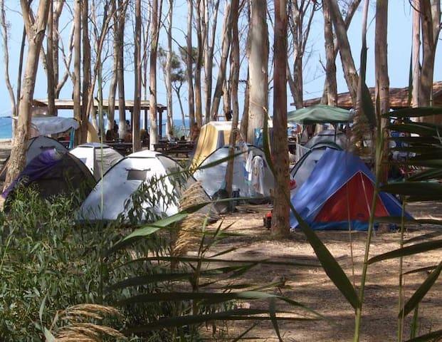 Палатка №1 в Эвкалиптовой роще