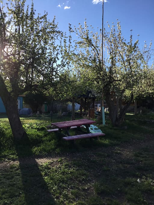 Open space with Gardens and Apple trees