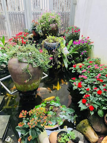 Garden with Koi fish pool, green tree and flowers