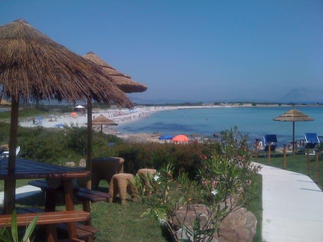 San Teodoro (OT) Sardegna Italia - San Teodoro - Apartment