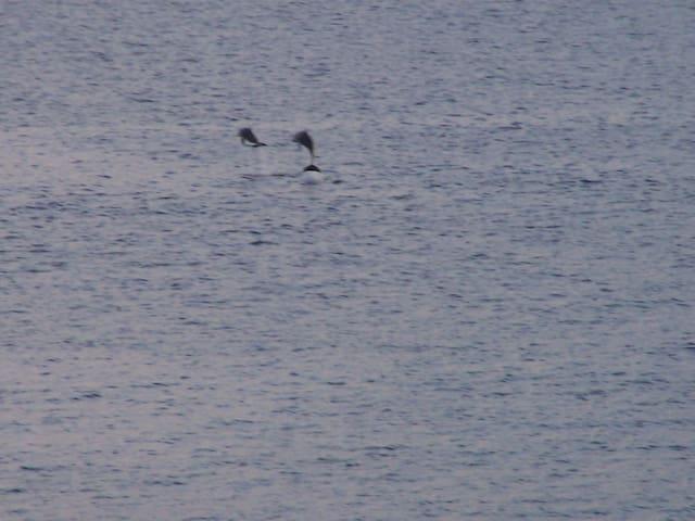 Les dauphins en visite