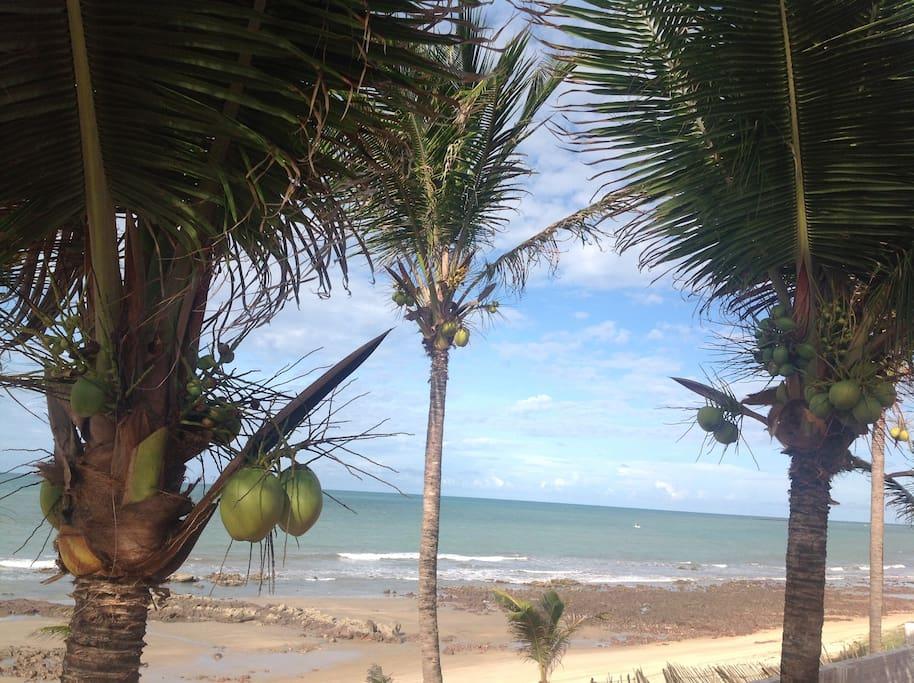 Água de coco e vento à vontade