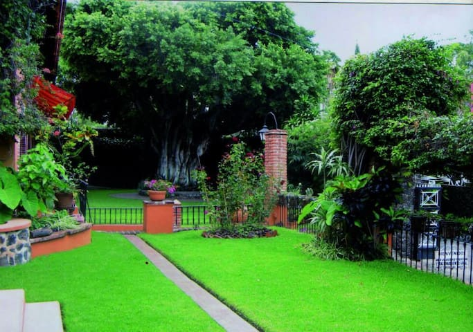 Majestic Indian Laurel tree surrounded by Flowers, Bougainvilleas and lovely green areas.
