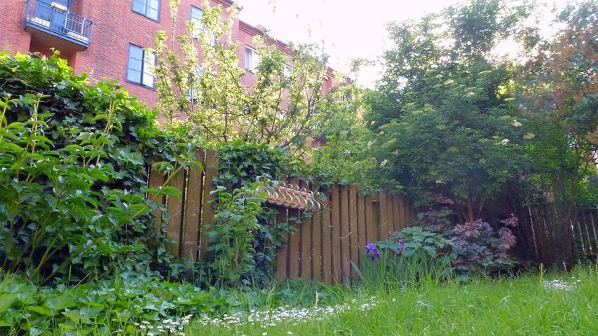 The lovely backyard in summer <3!
