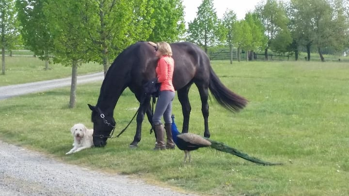 En pleine nature entre le Cadre Noir et Saumur! 2