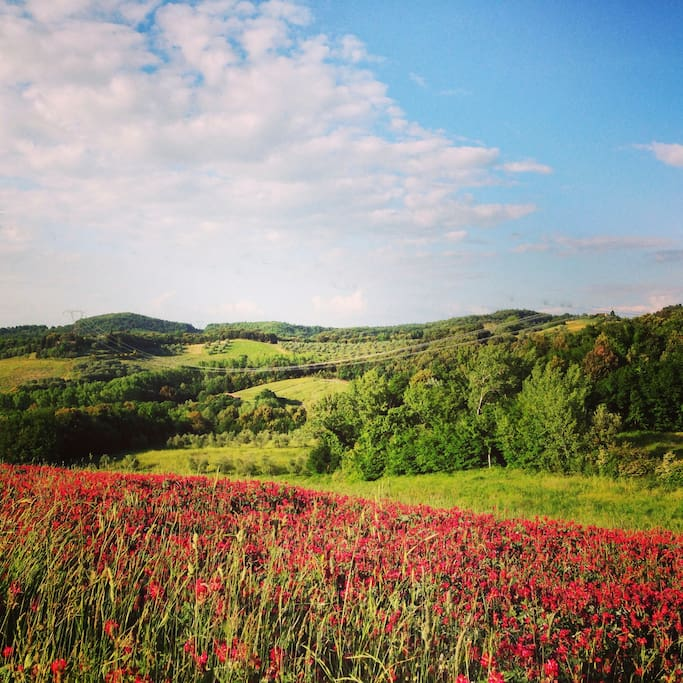 Spring explosion all around the Agriturismo Le Capanne