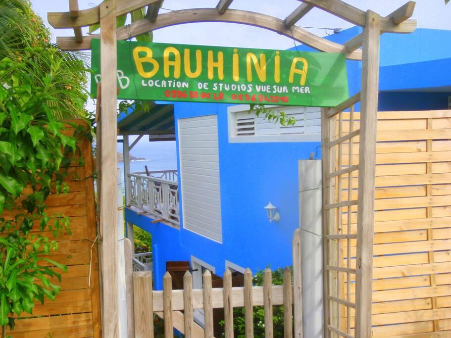 Bienvenue à la Bauhinia
