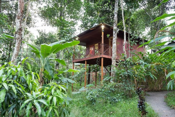 Eco friendly tree house