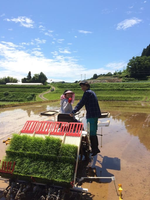 Hiro and Pan. We plant rice every June. You can try if you want!