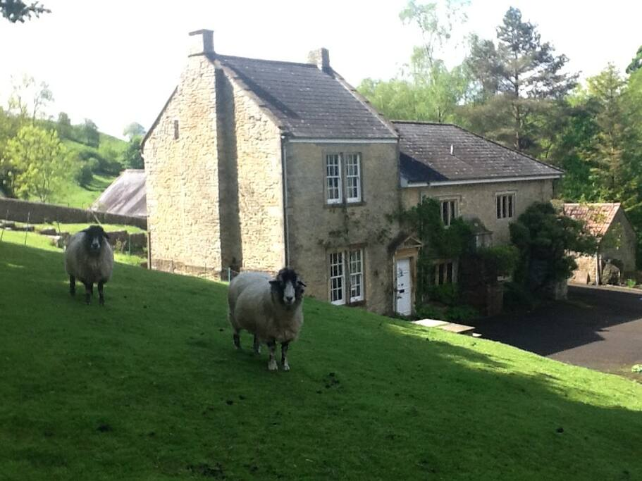 Family Bed And Breakfast Near Longleat