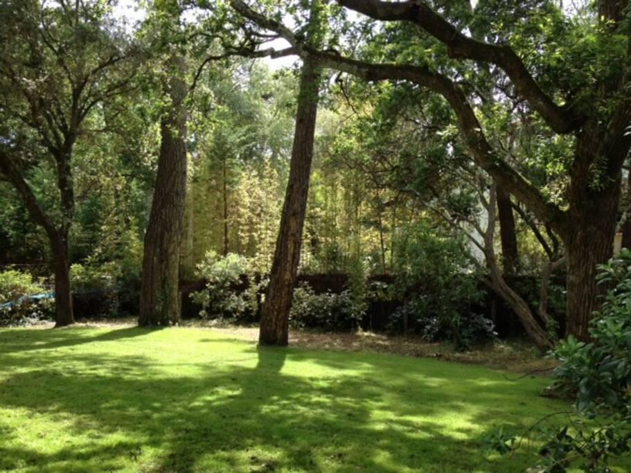 Parc de 400 m2 clôturé avec des arbres centenaires