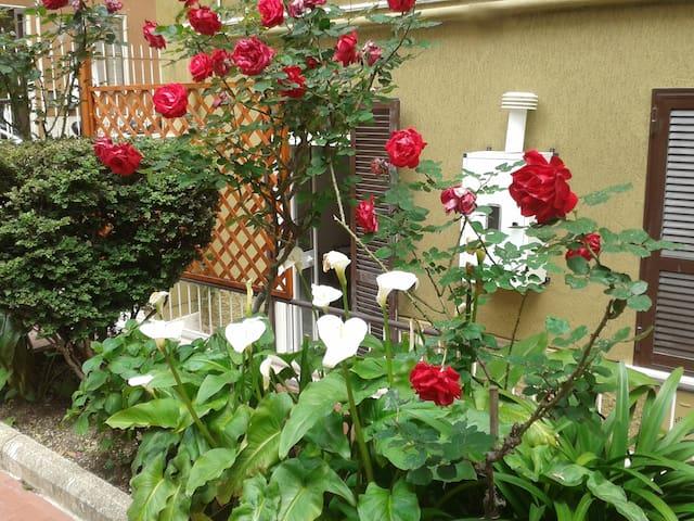 rome lovely apartment delizioso app