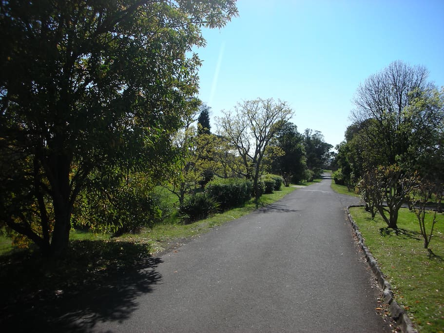 The driveway into St Joseph's