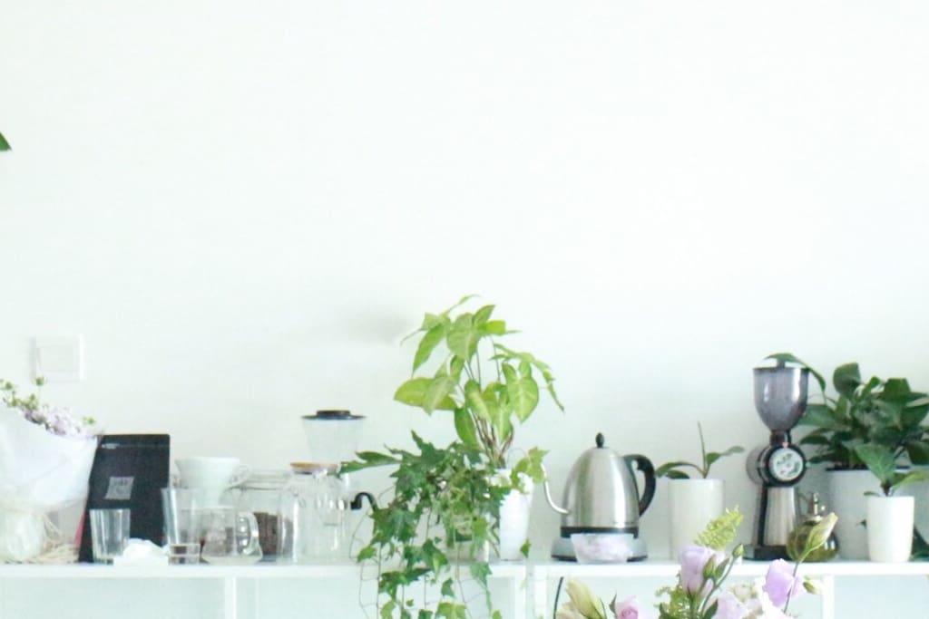 咖啡香气和植物环绕的白绿治愈系世界