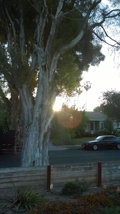 Sunrise on Ashwood Ave.