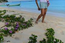 A beautiful morning walk on the beach!
