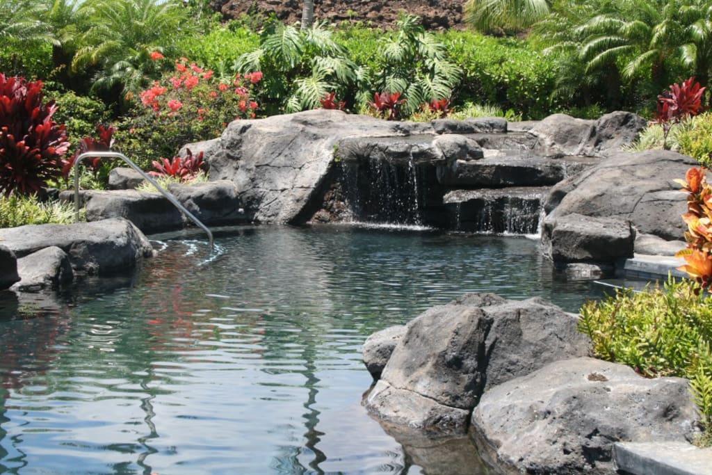 Outdoors,Pond,Water,Garden,Rock