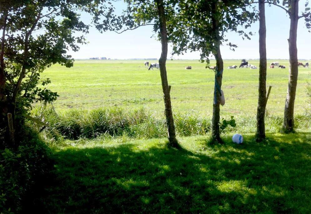 Vakantiehuis a d fluessen elahuizen villa 39 s te huur in for Weiland te huur